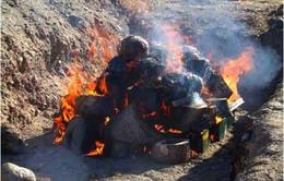 Peru: Tiêu hủy hơn 8 tấn ma túy