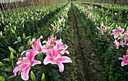 Hà Nội: Nhiều ưu tiên đặc biệt cho vùng nông nghiệp chuyên canh