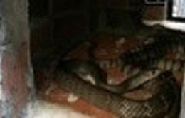 Bình Phước: Các trại gây nuôi động vật hoang dã lao đao vì đầu ra