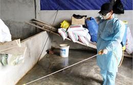 Hà Tĩnh: Tập trung khống chế dịch lở mồm long móng