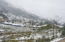 Sau mưa tuyết, sương muối tấn công Lào Cai