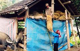 Các tỉnh miền núi phía Bắc tăng cường công tác chống rét cho vật nuôi