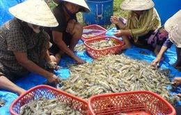 Năm 2013: Tổng sản lượng thủy sản cả năm tăng hơn 2%