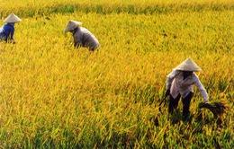 Cắt giảm 130.000ha đất trồng lúa trong năm 2014