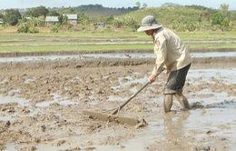 Hà Nội: Chủ động phòng chống hạn vụ Xuân 2014