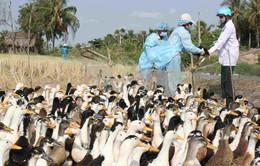 Các địa phương nỗ lực phòng chống dịch bệnh gia súc, gia cầm