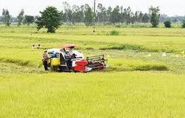 Triển khai nhân rộng các mô hình sản xuất nông nghiệp hiệu quả
