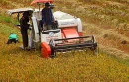 ĐBSCL: Nâng cao năng lực gặt, sấy lúa
