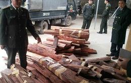 Phát hiện vụ vận chuyển gỗ lậu qua đường hàng không