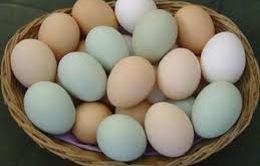 Các sản phẩm trứng, thịt gia cầm có dấu hiệu vượt cầu