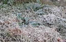Lào Cai đối phó với đợt sương muối gây hại lần 2