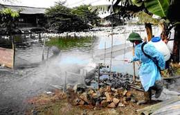 Bắc Ninh: Cần 3 triệu liều vaccine chống cúm gia cầm
