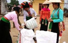 Hỗ trợ gạo cứu đói dịp Tết cho 9 tỉnh