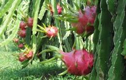 Nhiều mặt hàng nông sản tăng giá trong dịp Tết