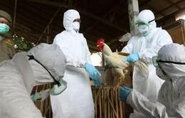 Đồng Tháp: Ca tử vong do cúm A/H5N1 đầu tiên trong năm 2014