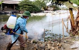 TT-Huế: Chủ động ứng phó với nguy cơ dịch cúm gia cầm