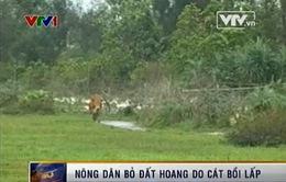 Quảng Nam: Nông dân bỏ đất hoang do cát bồi lấp