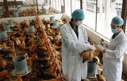 Các địa phương tăng cường phòng chống dịch cúm gia cầm