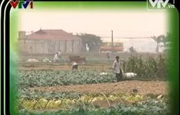 Vụ Đông Xuân 2013-2014 và mục tiêu giảm lượng tăng chất