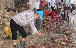 TP Hạ Long cấm bán gia cầm sống tại các chợ