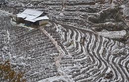 Mưa tuyết lại rơi trắng xóa tại Lào Cai