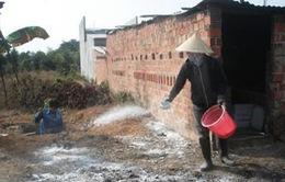 Xuất hiện ổ cúm A/H5N1 tại Quảng Bình