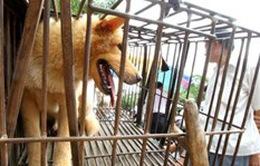 Thanh Hóa: Thêm ca tử vong vì chó dại cắn