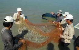 Năm 2013, Ninh Thuận có 120 ha ao tôm bị thiệt hại do dịch bệnh