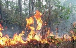 19 tỉnh có nguy cơ cháy rừng cấp cực kỳ nguy hiểm