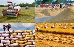 Doanh nghiệp không mặn mà với việc tạm trữ lúa gạo