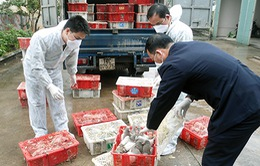 Bắt vụ vận chuyển trái phép chim bồ câu từ nước ngoài vào Việt Nam