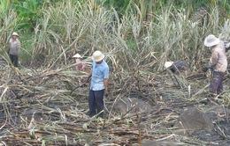 Miền Trung: Nông dân thiệt hại do hạn hán sớm