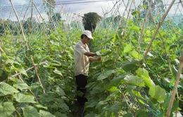 Ký kết sản xuất và tiêu thụ nông sản hữu cơ theo tiêu chuẩn VietGAP