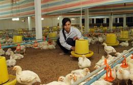 Chăn nuôi khó phục hồi do sức mua quá yếu