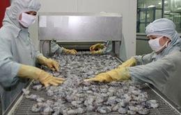 ĐBSCL phấn đấu đạt 2,55 tỷ USD kim ngạch xuất khẩu tôm