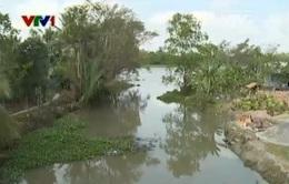 Xâm nhập mặn gây thiệt hại cho nông nghiệp