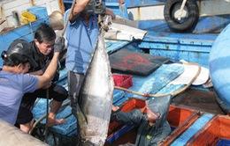 Bình Định: Thành lập Quỹ hỗ trợ ngư dân