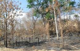 Cà Mau: 23.000ha rừng đang ở mức báo động cháy cao