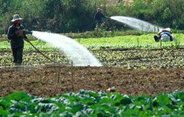 ĐBSCL: Sẽ chuyển đổi 112.000ha lúa sang trồng cây rau màu khác