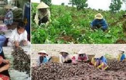 Chấn chỉnh việc thu mua nông sản từ doanh nghiệp FDI