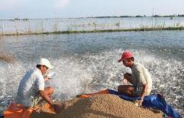 Giảm lãi suất cho vay lĩnh vực nông nghiệp về 8%/năm