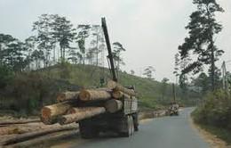 Xe quá tải ngang nhiên hoạt động tại Quảng Trị