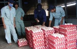 TP.HCM: Bắt đầu thu mua tạm trữ sản phẩm gia cầm