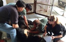 Bình Thuận xóa bỏ hoàn toàn nạn nuôi gấu trang trại