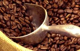 Giá cà phê tăng mạnh do ảnh hưởng hạn hán