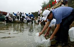 Thả cá tái tạo nguồn lợi thủy sản trên sông Hương