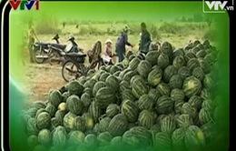 Nông sản ế thừa - bài toán thị trường?