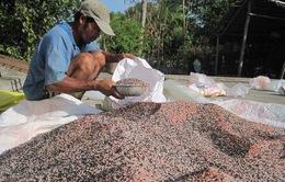 50% mẫu phân bón được kiểm tra có chất lượng kém