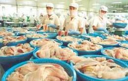 Phát triển sản phẩm cá da trơn Việt Nam chất lượng cao
