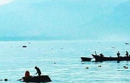 Quảng Bình bắt hai tàu cá khai thác tôm hùm trái phép